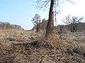 Zolotonis'kyi district, Cherkas'ka oblast, Ukraine - panoramio (500).jpg