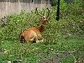 Zoo Kathmandu Nepal (5085861551).jpg
