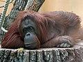 Zoo z01.jpg