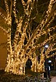 (1)Fairy lights UNSW-2.jpg