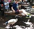 (1)Featherdale Wildlife Park.jpg