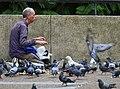 (1)Man feeding pigeons.jpg