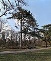 «Олександрія» Велика галявина Чорна сосна IMG 1808 stitch.jpg
