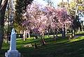 Árboles floreciendo en el parque del Retiro.jpg