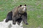 Ähtärin karhut 11.jpg