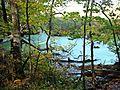 Вид на Ірдинське болото.jpg