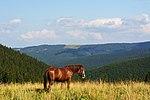 Гуцульський кінь.jpg