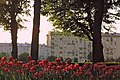Клумба в парке Горького.jpg