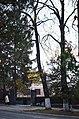 Липа кримська по вулиці Лесі Українки, 60. Фото 1.jpg