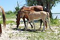 Лошадь с жеребенком.jpg