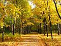 Осенняя аллея парка Сосновка.jpg