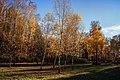 Осінній Дендропарк. Жовте листя.jpg