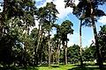 Парк Сосенки в районе Царицыно города Москвы.JPG