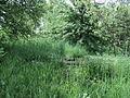 Парк шума Гази Баба во мај (2).JPG