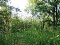 """Парк шума """"Гази Баба"""" 36.jpg"""
