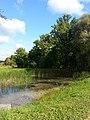 Пейзаж с заросшим прудом.jpg