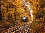 Пуща-Водиця восени.jpg