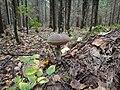 Ржевский (Охтинский) лесопарк.56.jpg