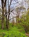 Склон в лесопарке в Хотылево.jpg