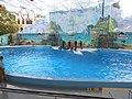 Сочинский дельфинарий парка «Ривьера». 70.jpg