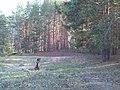 Сплав - panoramio (5).jpg