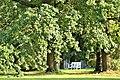 Старый парк - дубы.jpg