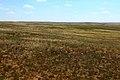 Степные просторы Соль-Илецкого района Оренбургской области - panoramio.jpg