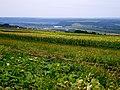 Тыргул Вертюжень (ближе), Черлина (дальше) - panoramio.jpg