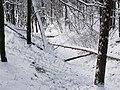 Украина, Киев - Голосеевский лес 195.jpg