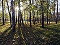 Черкизовский лесопарк.jpg