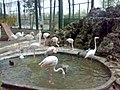 باغ پرندگان - panoramio.jpg