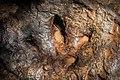 ลอยเท้าไดโดเสาร์ แห่งอุทยานแห่งชาติภูเก้า-ภูพานคำ.jpg