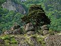 ს8, Georgia - panoramio (1).jpg