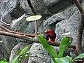上野動物公園, Ueno Zoo(Ueno Zoological Gardens) - panoramio (9).jpg