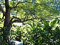 內灣 Neiwan - panoramio.jpg