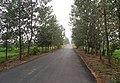 安徽省巢湖市含山县 - panoramio (385).jpg