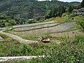 小山の棚田 - panoramio.jpg