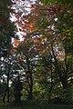 殿ヶ谷戸庭園 - panoramio (1).jpg