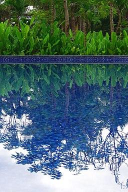 荔園溫泉酒店游泳池 Swimming Pool in Litchi Garden Hot Spring Resort - panoramio
