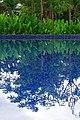 荔園溫泉酒店游泳池 Swimming Pool in Litchi Garden Hot Spring Resort - panoramio.jpg