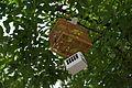 街路樹に吊るされた虫籠.JPG