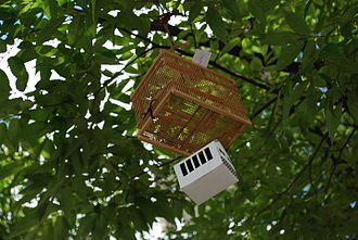 Itami, Hyōgo - Insect basket suspended in the street tree