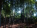 麻拐山 - panoramio - 曹松意 (46).jpg