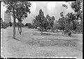 00629 Grand Canyon Historic- Desert View Watchtower Approach 1936 (5898096120).jpg