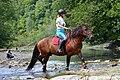 02018 0516 Abschied vom Sommer, Reiten auf den Huzulen Pferden in Rudawka am Wisłok.jpg