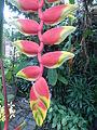 04832jfPulilan Butterfly Haven Resorts Roads Bulacanfvf 14.JPG