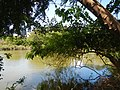 07976jfPampanga River banks Candelaria Boats Fish Delta Bulacan Roadsfvf 04.JPG