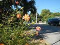 09668jfCuyapo Welcome Districts Roads Parks Center Nueva Ecijafvf 22.JPG