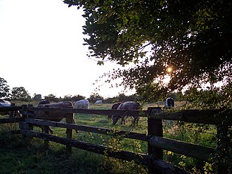 Doxey Marshes - Image: 1142July 2005 077