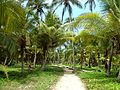 114 Tayrona Palm Trees Colombia.JPG